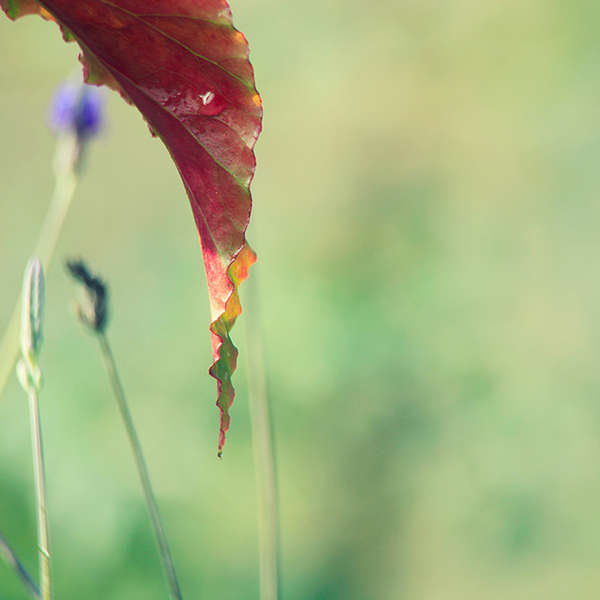 : Flora : visual meanderings by vt fine art photography