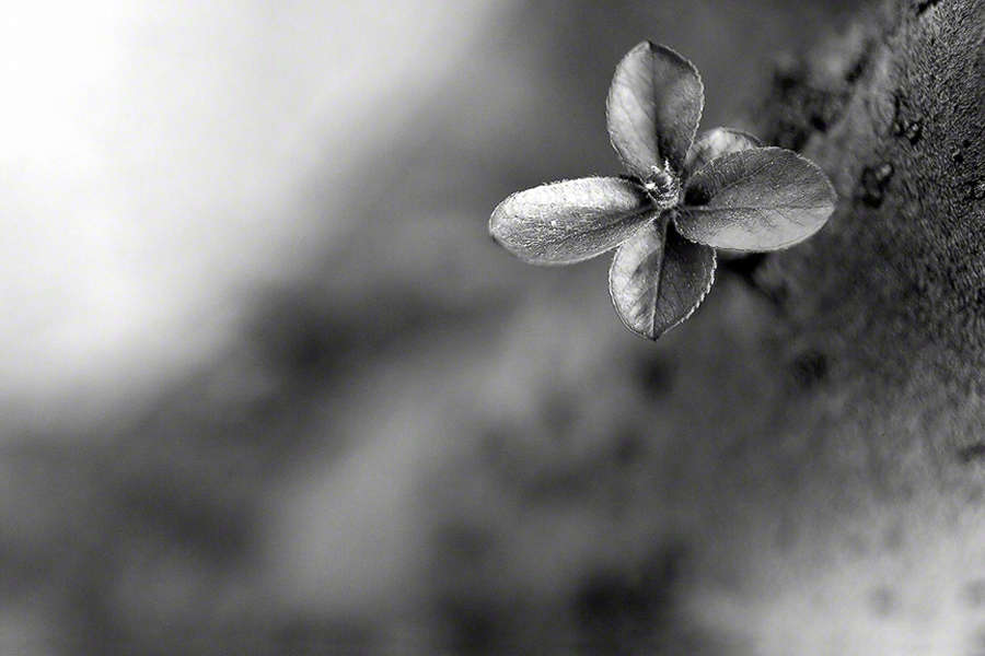 : Nature in Black and White : visual meanderings by vt fine art photography
